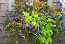 gardening & outdoor living / Beautiful outdoor landscaping, outdoor pools, ponds, hot tubs, and flowers! These sure make you wish that summer stayed all year round. Wonderful ideas for backyards. / by Vanessa Stade