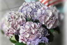 Hydrangea ﻬஐ / A flower always nice