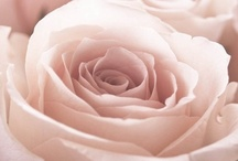 Dusty...pale pink / The most refined and delicate shades of pink