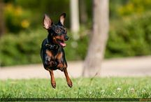 Cute dogs / by Constance
