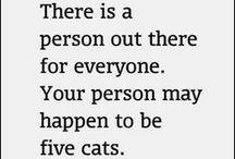 I'm a cat lady.  / by Kristen Buckley