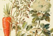 Botanical plates ೋ / Fine illustrations of the plant kingdom
