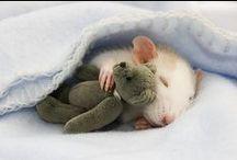 Animales-otros roedores / by Kurenai Yuuhi