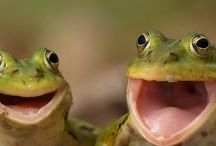Frogs / by Donna Barrett