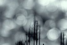 Haze | Bokeh / ...reflections and light... / by D.