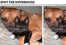 Pet Photo Hunt / by Pets Adviser