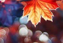 I Love Fall! / by Ashley Torgusen-Schoenack