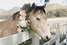 Flora & Fur Babies / Beloved pets putting their best foot forward on your big day