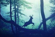 Ach My Deer!