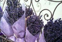 ∫ lavender ~ purple ∫