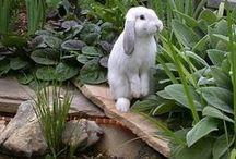 Rabbits I Love