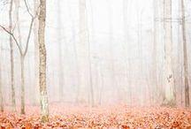 Autumn / Fashion Inspiration, Nature, Colors, Textures