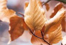 ∫ autumn  feelings ∫