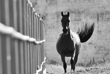 Magnificent Horses / So powerful and gentle