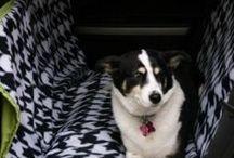 Wally the wonder dog / for my little walnut / by Olia Alexandrovna
