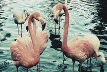 It's a Pink Flamingo