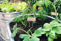 Gardening / Gardening: growing flowers and vegetables in your home garden.