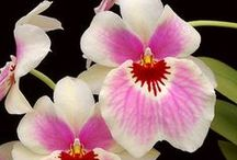 Oh Orchids / by Susan Parker