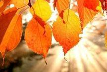 Ma table d'automne Gü / Née un premier jour d'automne, c'est ma saison préférée: la nature revêt ses plus belles couleurs et on retrouve le plaisir de rester à la maison. Ma journée d'automne idéale : après une longue balade en fôret rentrer se réchauffer autour d'un thé fumant accompagné d'un délicieux moelleux au chocolat ou d'un cheesecake au speculoos. ^^