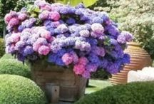 Flowers & Such & Outdoor Spaces / Floral arrangements and Gardening / by Suzanne Grupe