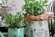Herbes | Herbs