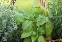 Herb Garden / by Rosann Burch Cox
