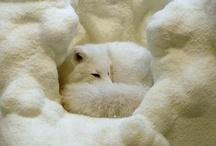 Winter White / by ana S. rio