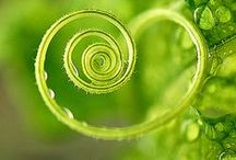 GREEN / I love the color Green.... let's play. / by Time For You ORGANIZING