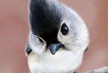 Pássaros / Deus é perfeito em sua criação.
