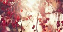 Autumn ~ Fall