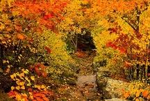 fall... / by Judy Eddy