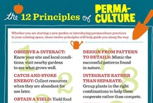 Permaculture  / by Vanessa French Elerby