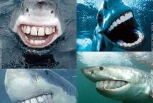 Dental humor :)  / by Heather Dwyer