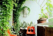 Terrasse und Balkon / Pflanzen für draußen, Balkonideen, Terrasse einrichten, Kakteen, Sukkulenten, Outdoormöbel