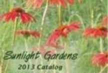 online nurseries /local garden centers