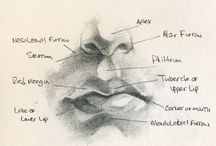 Anatomic Drawing Studies