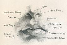 Anatomic Drawing Studies