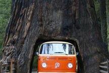Amazing sights / Amazing sights travel