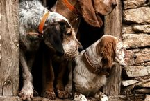 """Nothin' But a Hound Dog / """"No matter how little money and how few possessions you own, having a dog makes you rich."""" --Louis Sabin  #hunting #huntingdog"""