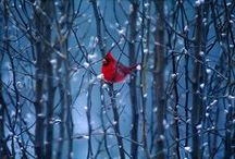 Christmas ~ Winter ~ Blue and Reds / by Susan Bambino