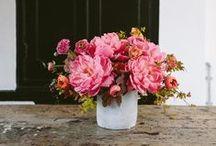 plants & flowers / by Jenna Sachs