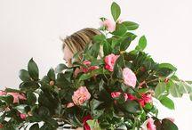 spring / by Jenna Sachs