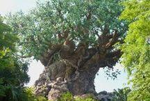 Disney - Animal Kingdom / by Amber Sweeney