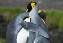 Everything Penguins / by Cathleen B