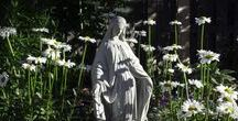 In The Garden / Garding tips and pictures that inspire