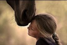 Pferd / by Susanne Huettner