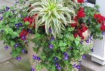 Flowers/Outdoor Ideas / by Teresa Beed