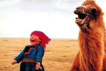 """""""If we couldn't laugh, we would all go insane.""""  Jimmy Buffett / by Amanda Bell"""