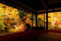 紅葉の名所 The best spot of autumn colors in Japan / 遠出してでも見に行きたい、全国の紅葉の名所をご紹介します
