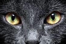 Kitter Cats / Cats